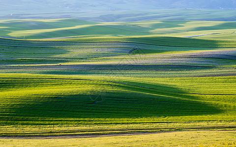 线条绿草原图片