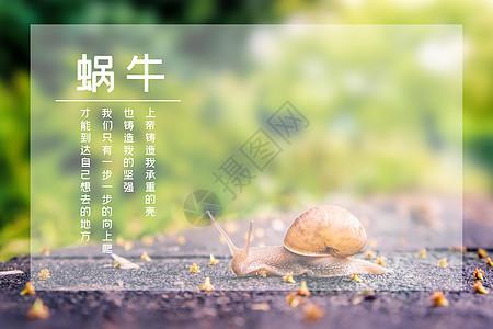 蜗牛励志海报图片