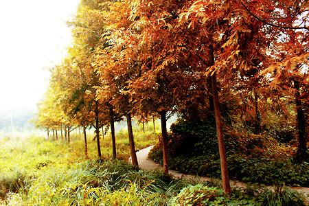 蜿蜒的林中小路图片