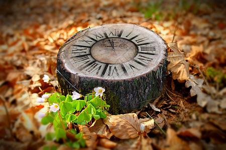 生命的生长需要多少时间 停止砍伐图片