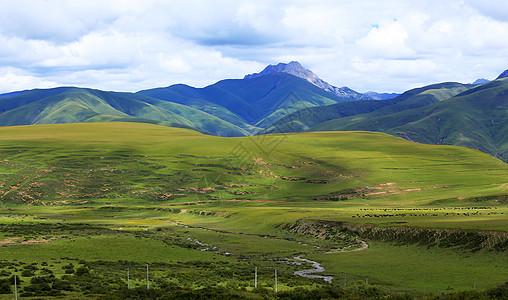 延绵辽阔的西藏草地图片