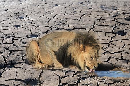 动物渴望水资源环保背景图图片