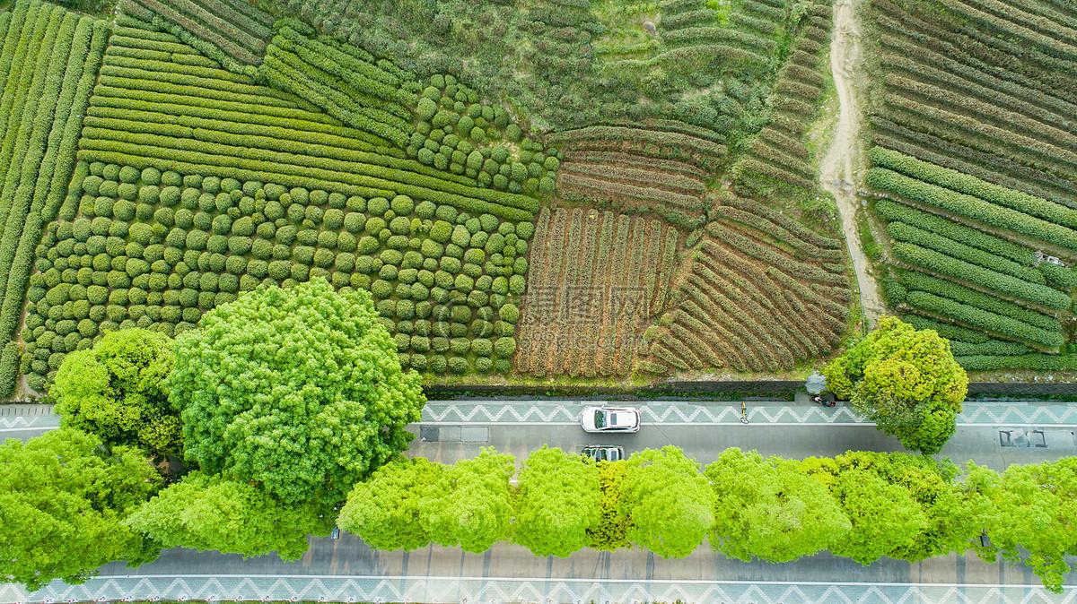 种植枸杞苗木带领村民致富的大学生村官