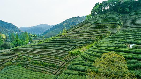 航拍梅家坞绿色茶园图片