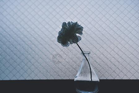 窗台简约花瓶花朵图片