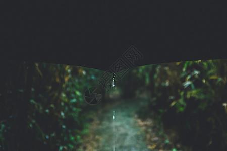 林中雨图片