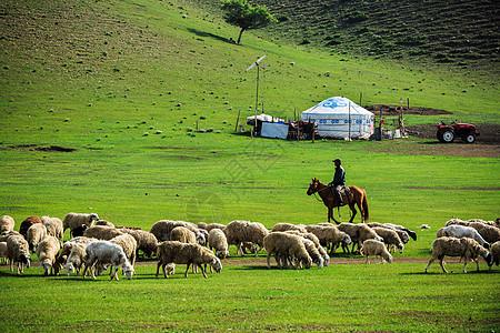 草原上的牧羊人图片