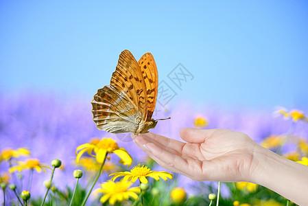 停在手中的蝴蝶图片