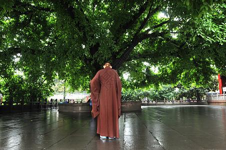古寺庙内佛教僧人在茂盛的树下沉思图片