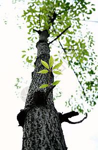 木棉树图片