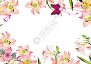 百合花背景图图片