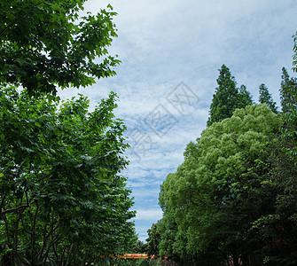 校园树林天空背景图片