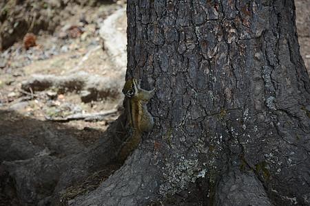 爬树的小松鼠图片