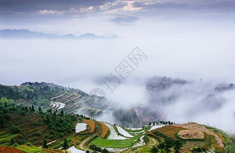云海中的梯田图片