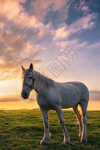 飞驰的白色骏马图片