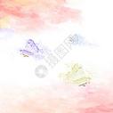 最美蝴蝶图片