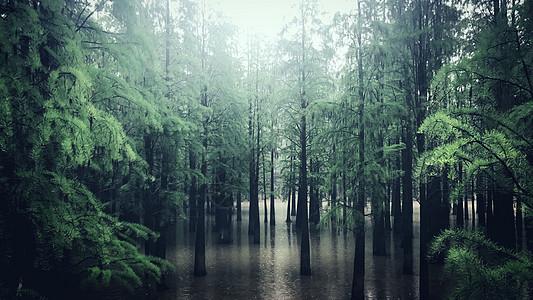 山水森林图片