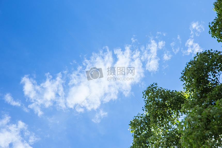 标签: 背景绿植素材自然蓝天风景风光阳光白云清新天空大树多云形状