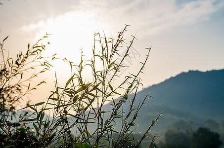 清晨-雨露与蓝天图片