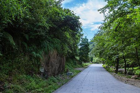 自然景区绿植公路图片