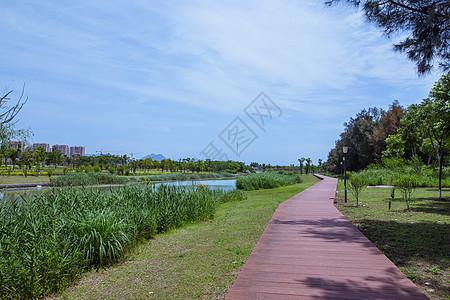 蓝天白云公园健身散步路风景图片