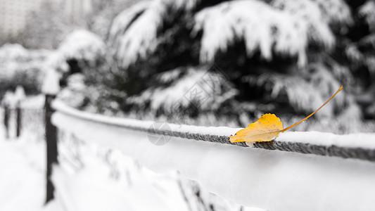 雪中公园银杏叶图片