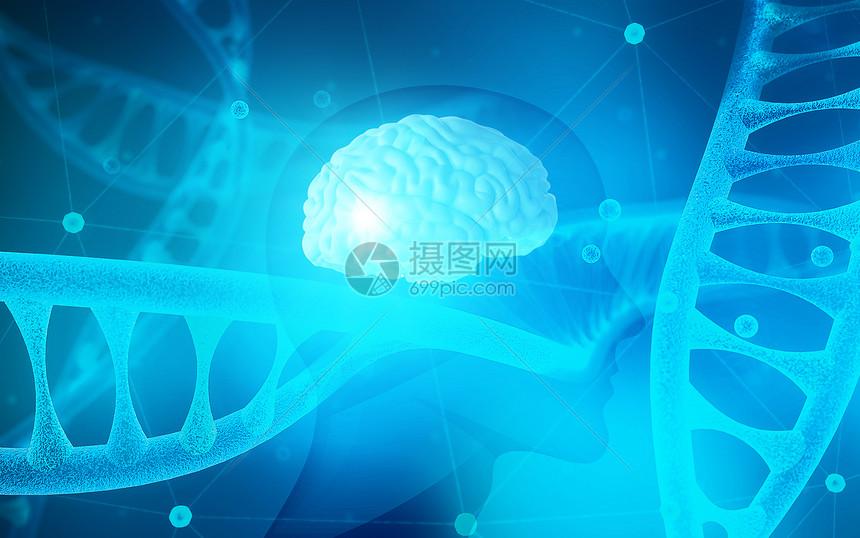 3D人体大脑图片