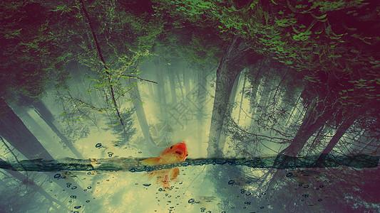 森林和鱼合成图片