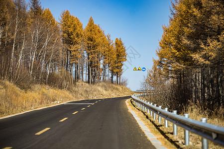 秋天白桦树林中的公路图片