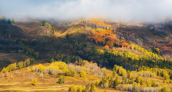 云雾笼罩层林尽染图片