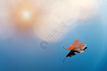 水中的叶子图片
