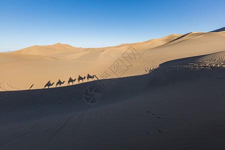 沙漠驼队图片