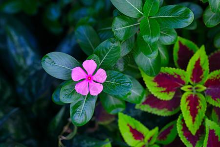 大片绿叶衬托下的小红花图片