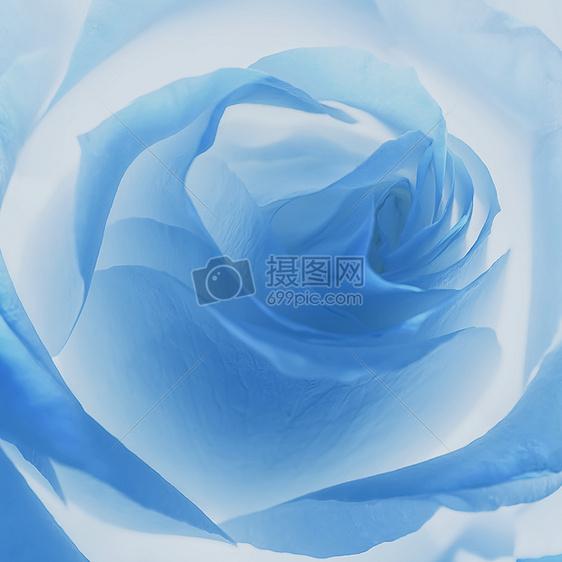 蓝调玫瑰梦图片