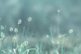 春天里的花草图片