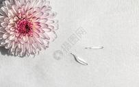 淡淡的雏菊香图片