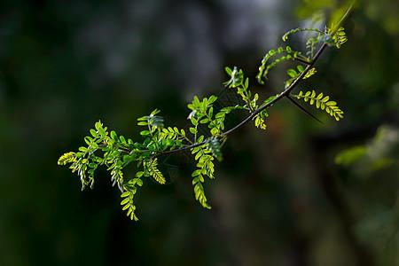 春天里的绿色小树枝图片