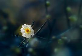 春天绽放的花卉图片