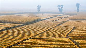 晨雾中的农田图片