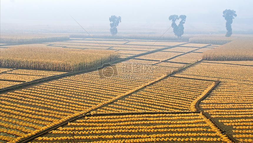 晨雾中的农田摄影图片免费下载_自然/风景图库大全