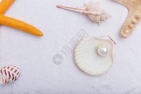 夏日沙滩珍珠贝壳海星素材图片