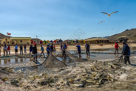 海滩捕捞金枪鱼图片