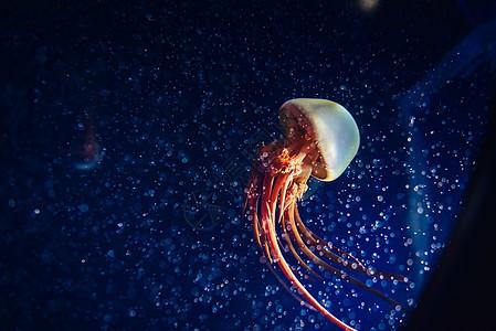 孤独生物水母图片