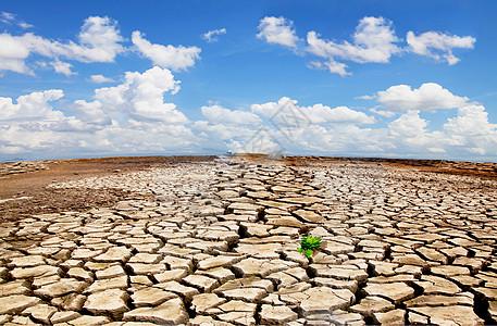 干裂沙漠中的植物图片
