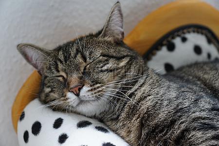 可爱小猫咪高清图片