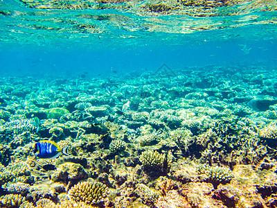 马尔代夫珊瑚礁图片