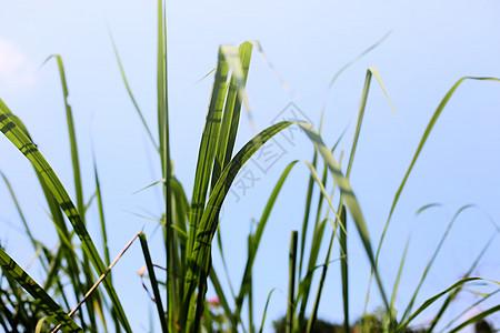 青草与天空图片