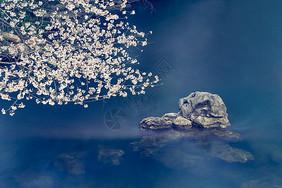 太子湾的樱花季图片