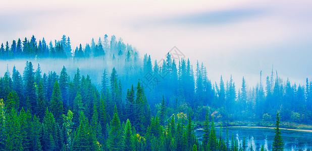 森林晨雾图片