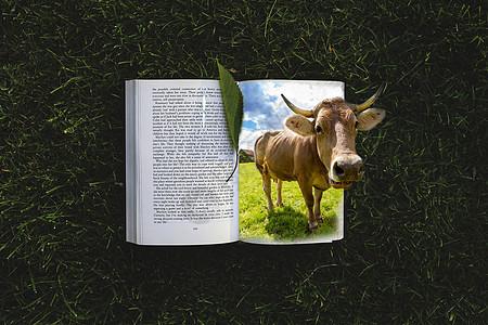 树里出来吃草的牛图片